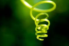 Twirl-Lonicer